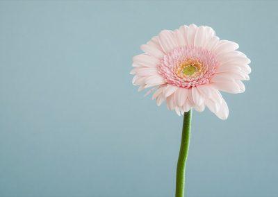 Minimalismus flower